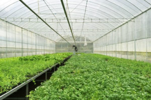 Lưới chắn côn trùng – giải pháp an toàn trong trồng rau sạch