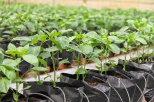 Các sản phẩm vòi tưới nông nghiệp cho nhà nông