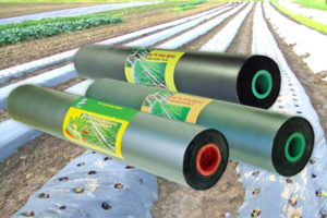 Lợi ích từ việc sử dụng màng phủ nông nghiệp